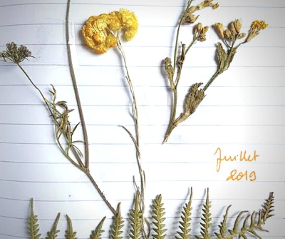 Carnet créatif avec des fleurs séchées